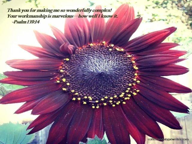 sunflowerinsun2